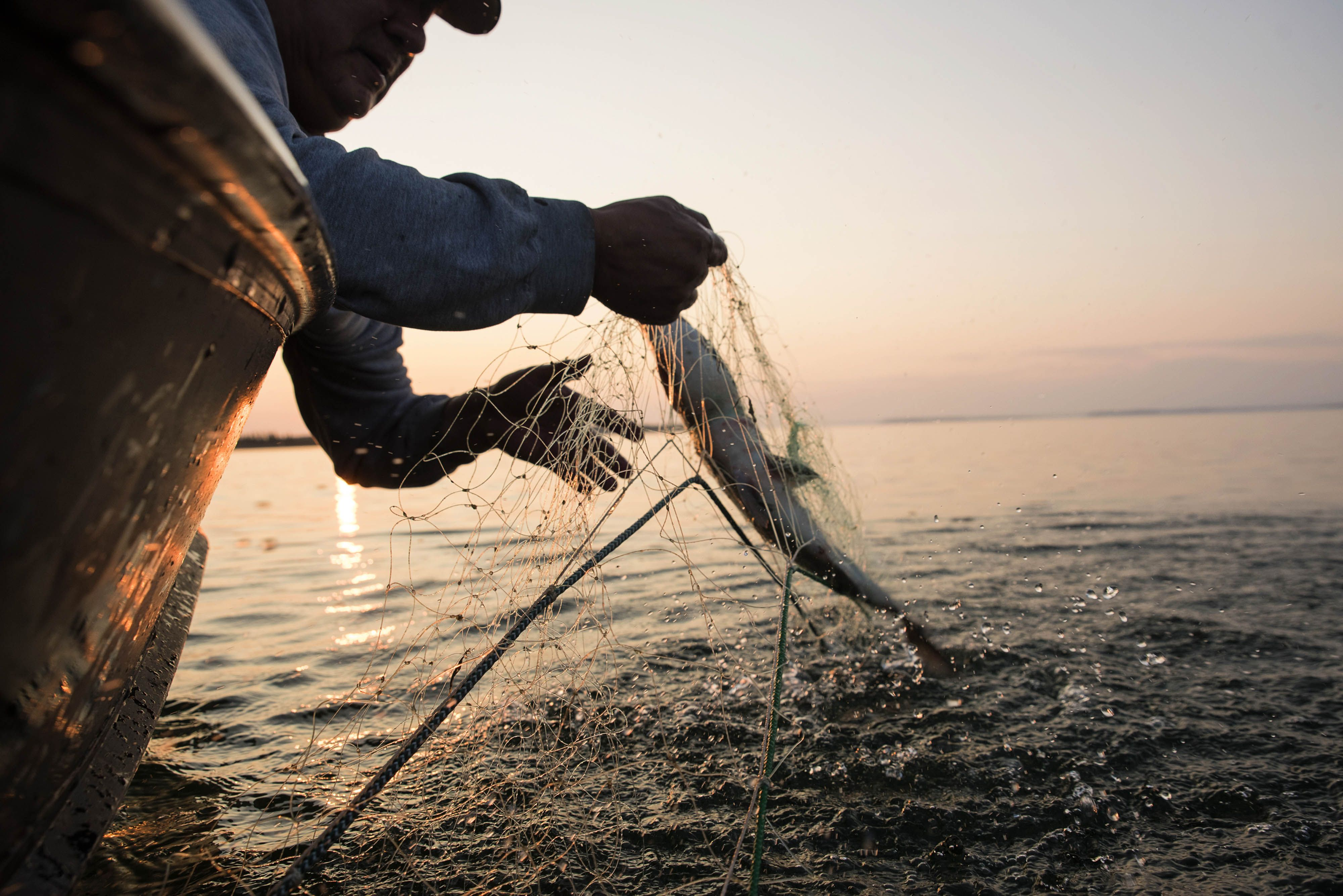 view of a man's hand pulling a salmon in a fishing net out of the water