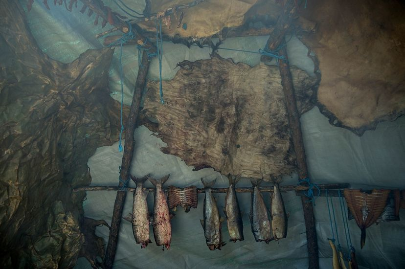 Moose hides and fish are hung to dry inside a teepee.