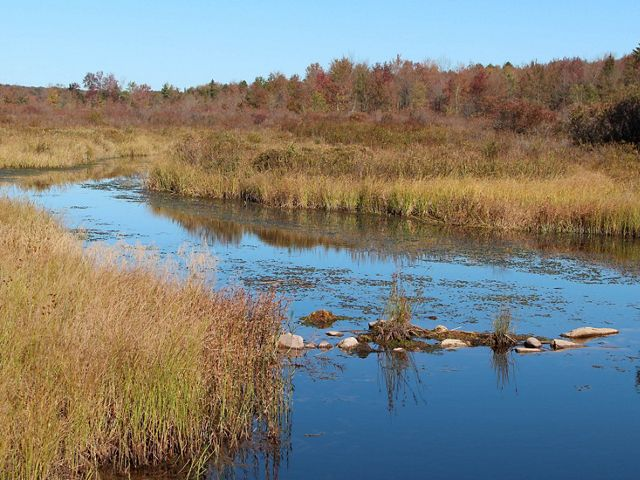 Brown grasses surround a small wetland.