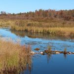 A quiet creek spreads out into grassy wetlands.