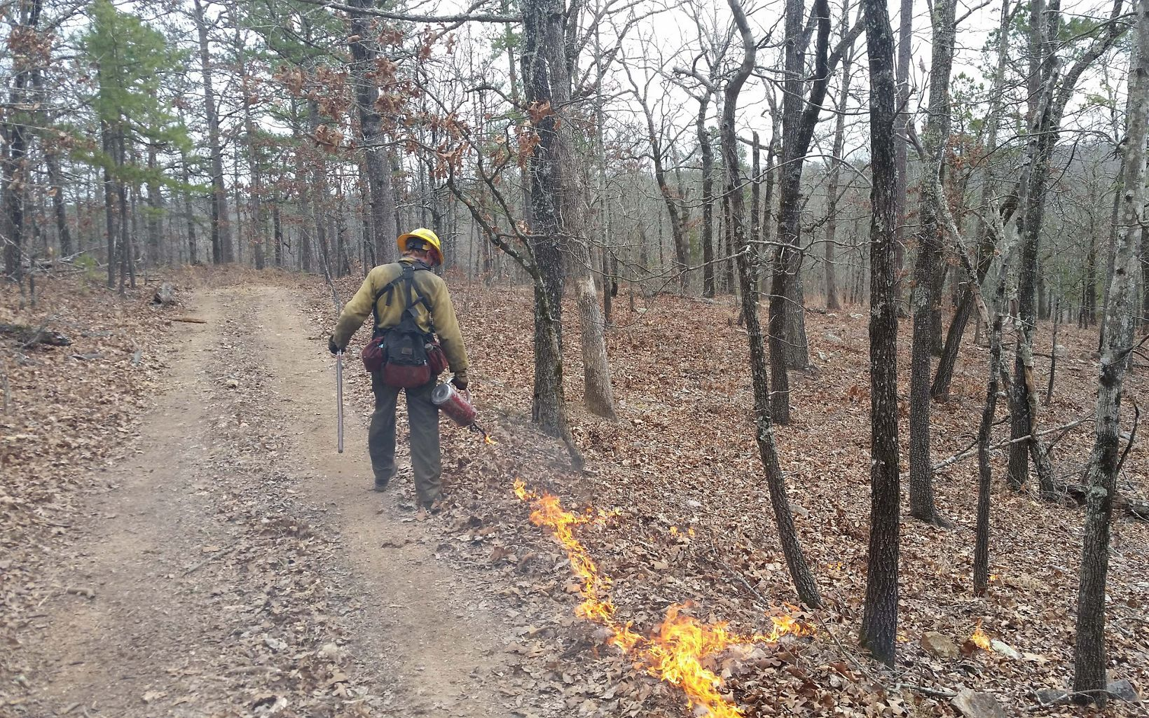 a man ignites a fire line of a controlled burn