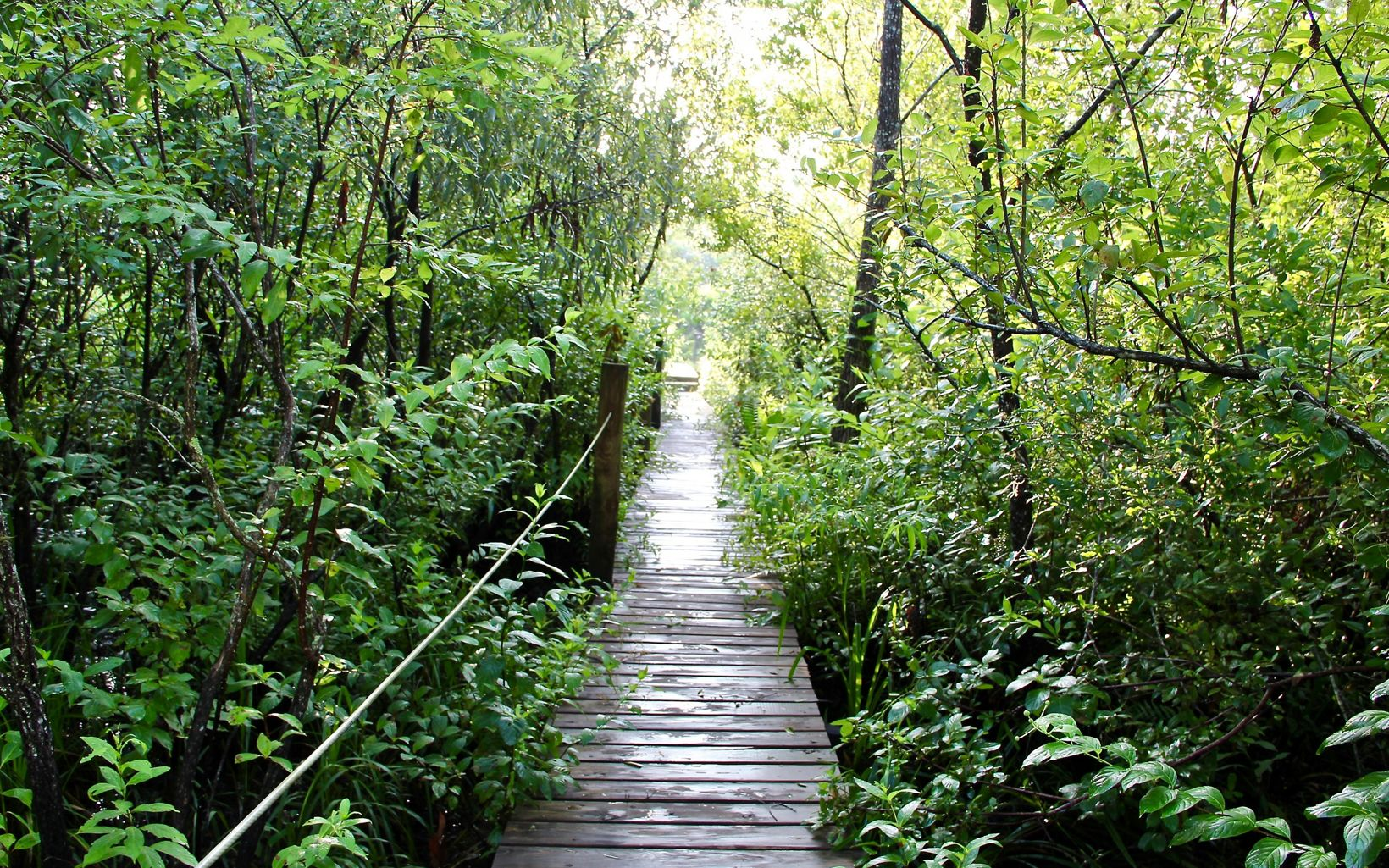 Boardwalk at Tiger Creek Preserve