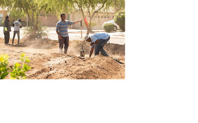 Black community members in Phoenix with shovels planting trees.