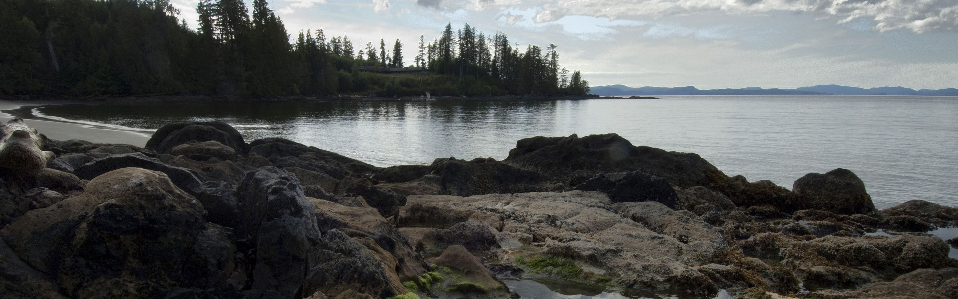 A rocky shoreline with tide pools lined with green vege