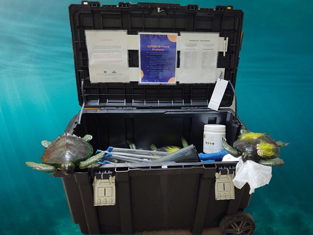 A trunk containing turtle replicas and educational materials about sea turtles.