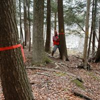 A man in a red vest ties an orange plastic tag around the trunk of a tree in a forest. Another tagged tree is visible in the foreground.