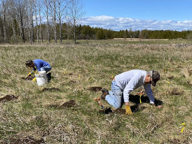 Two people kneel in a grassy field where they are digging holes to plant tree seedlings.