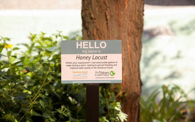 """Closeup view of a sign accompanying a Honey Locust tree, with the words """"Hello"""" in at center. The small sign is in the foreground and green shrubs and a tree trunk are in the background."""