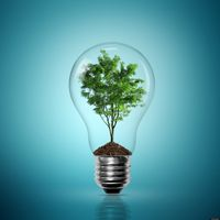 A tree is encased within a light bulb.