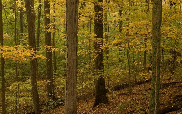 Woods with fall foliage.
