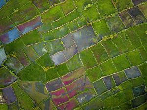 Aerial view of farm plots