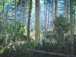 Thinning at Twining Campground near Taos Ski Valley