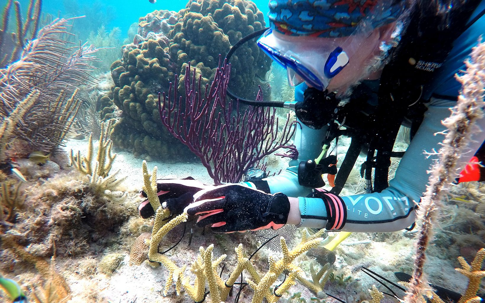 Coral planting in Dry Tortugas National Park