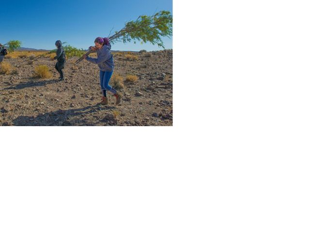 UNLV Landscape Architecture students helped plant trees at 7J Ranch for their fall 2019 studio class.