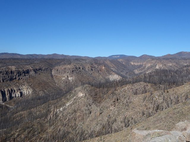 Cochiti Canyon, 3 years after the devastating Las Conchas fire.
