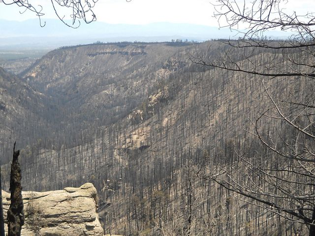 Burned forest in the upper Frijoles.