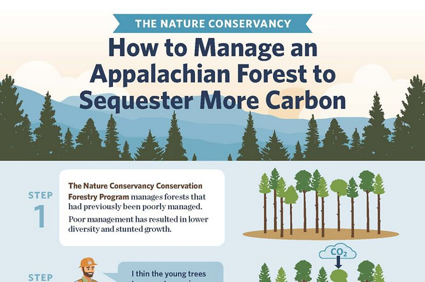 Managing forests to sequester more carbon.