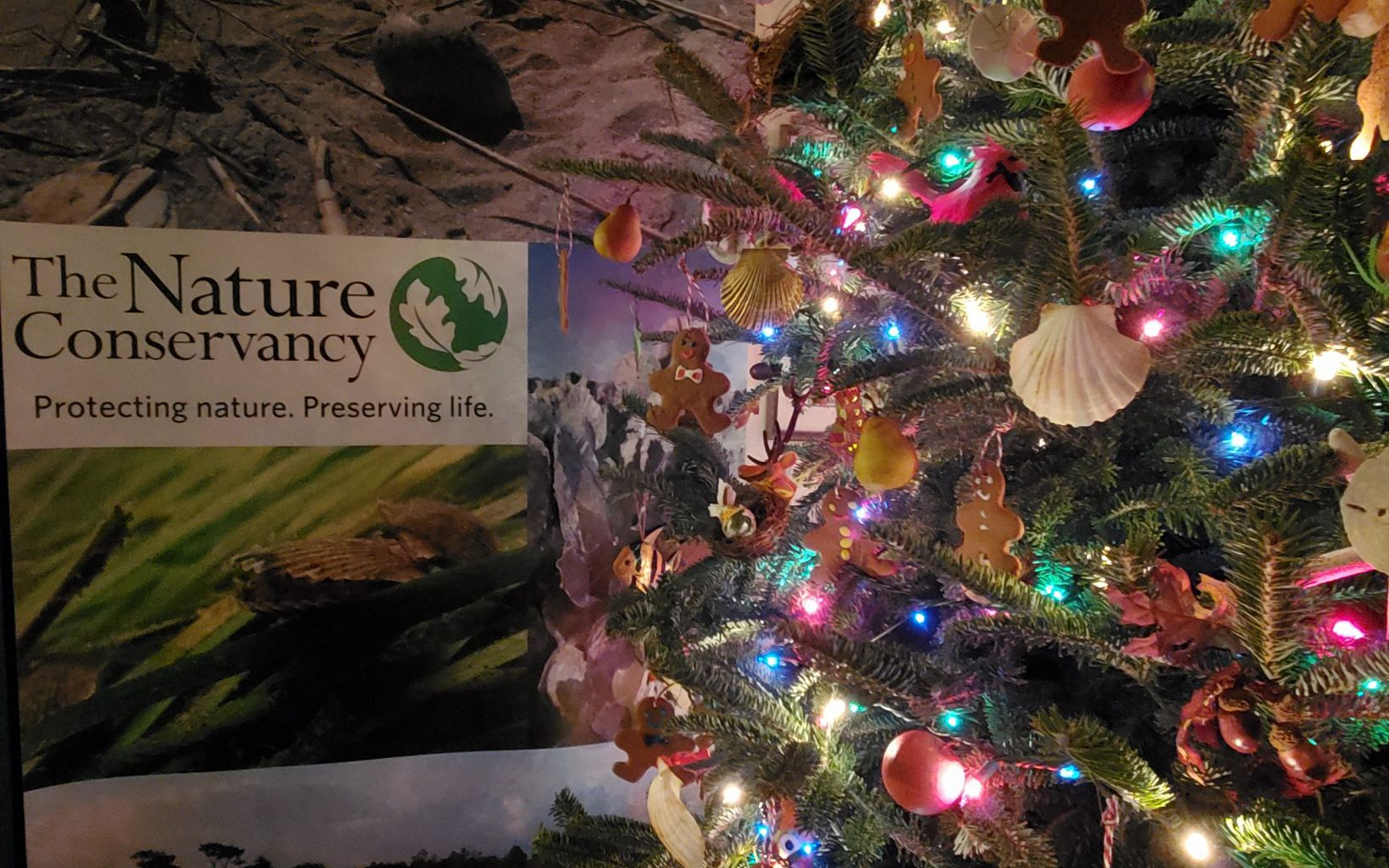 Holiday tree decorated with shells and gingerbread cookies next to a poster with The Nature Conservancy's logo on it.