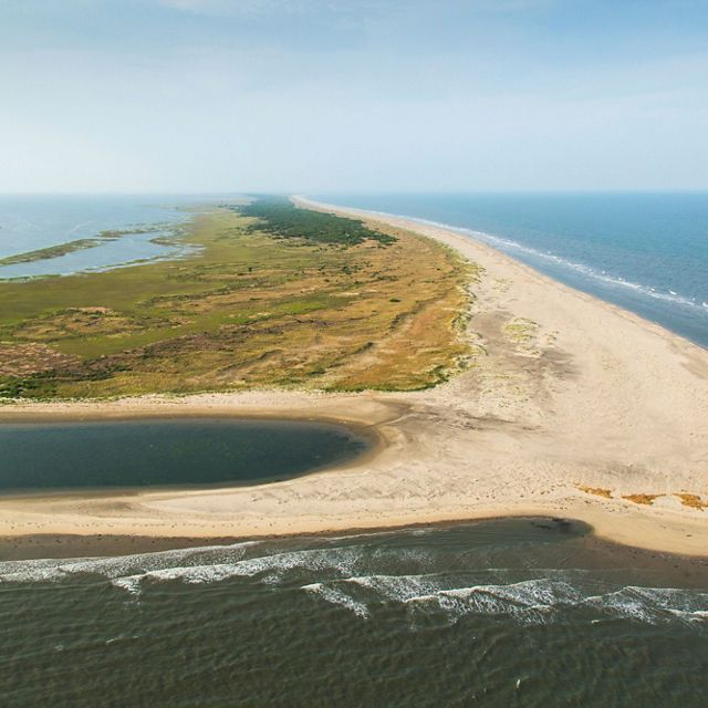 Aerial view of Hog Island, Virginia. The Atlantic Ocean laps against a wide stretch of sand. The back of the island is covered in low scrub and a stand of coastal forest.