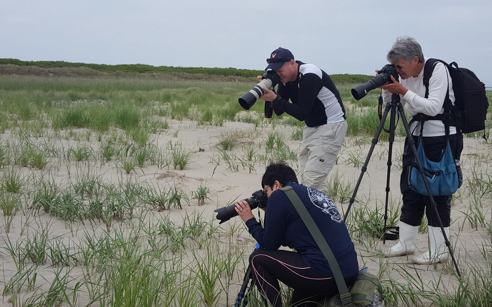 Three people with cameras photograph an unsee animal in the tall grass.