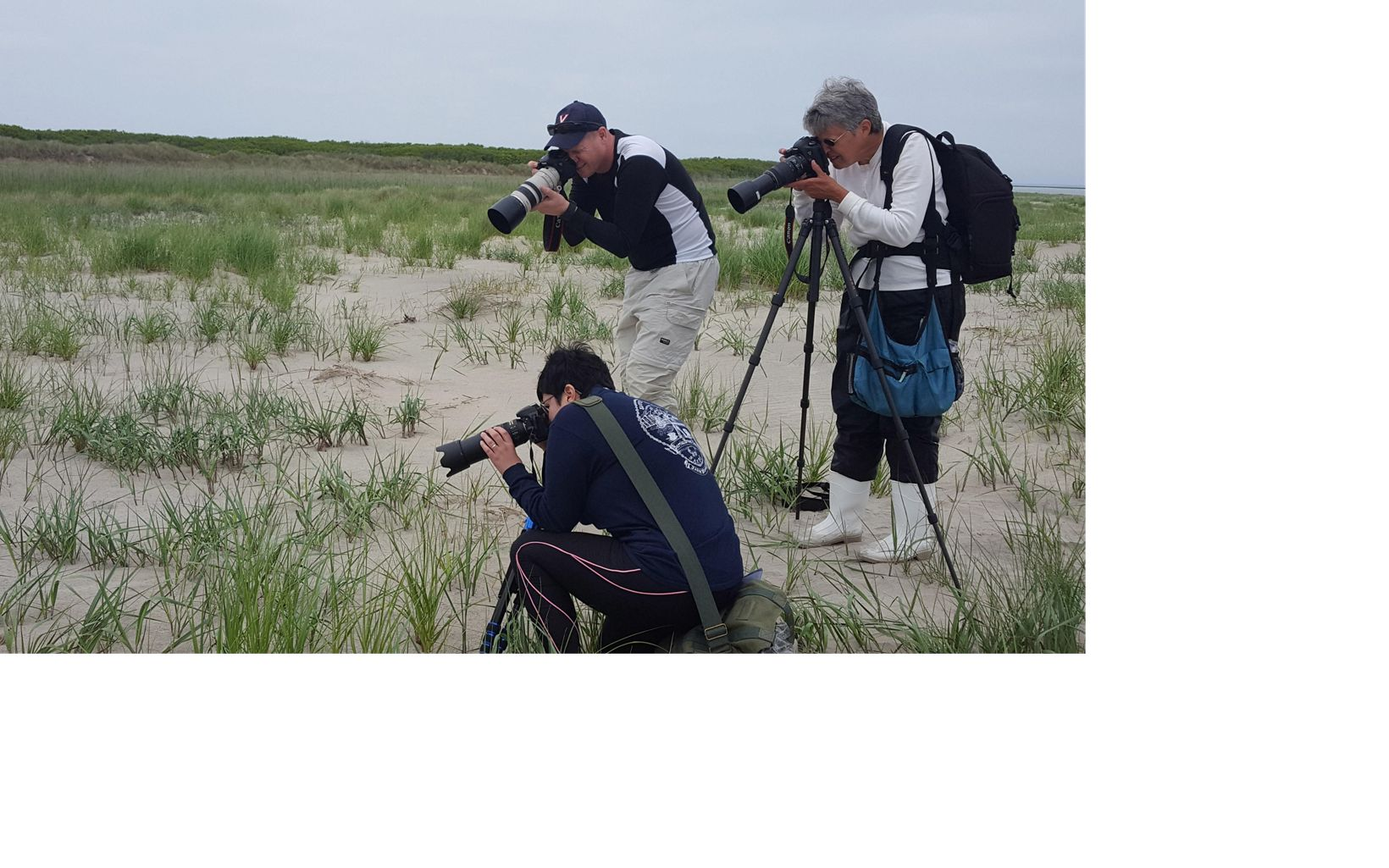 Three people with cameras photograph an unseen animal in the grass on a beach..