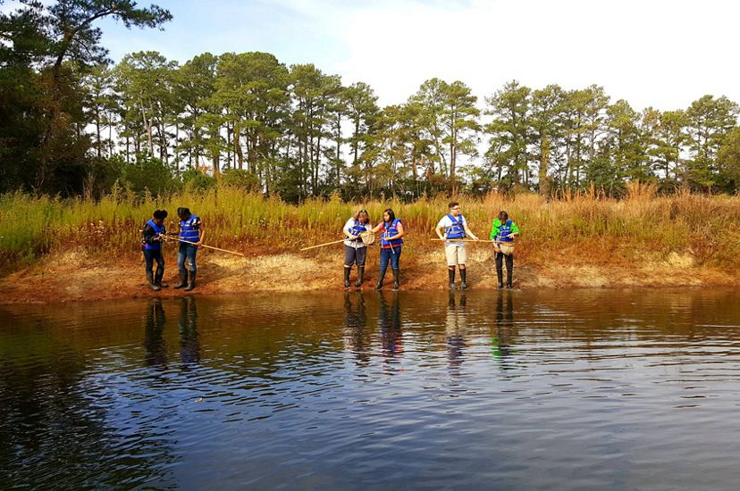 Six children standing in groups of two use dip nets to explore a tidal creek. The surface of the creek is gently rippled. Tall pine trees line the horizon in the background.