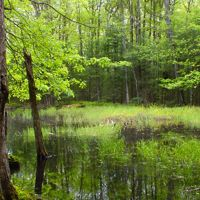 Lush forest surrounds a wetland.
