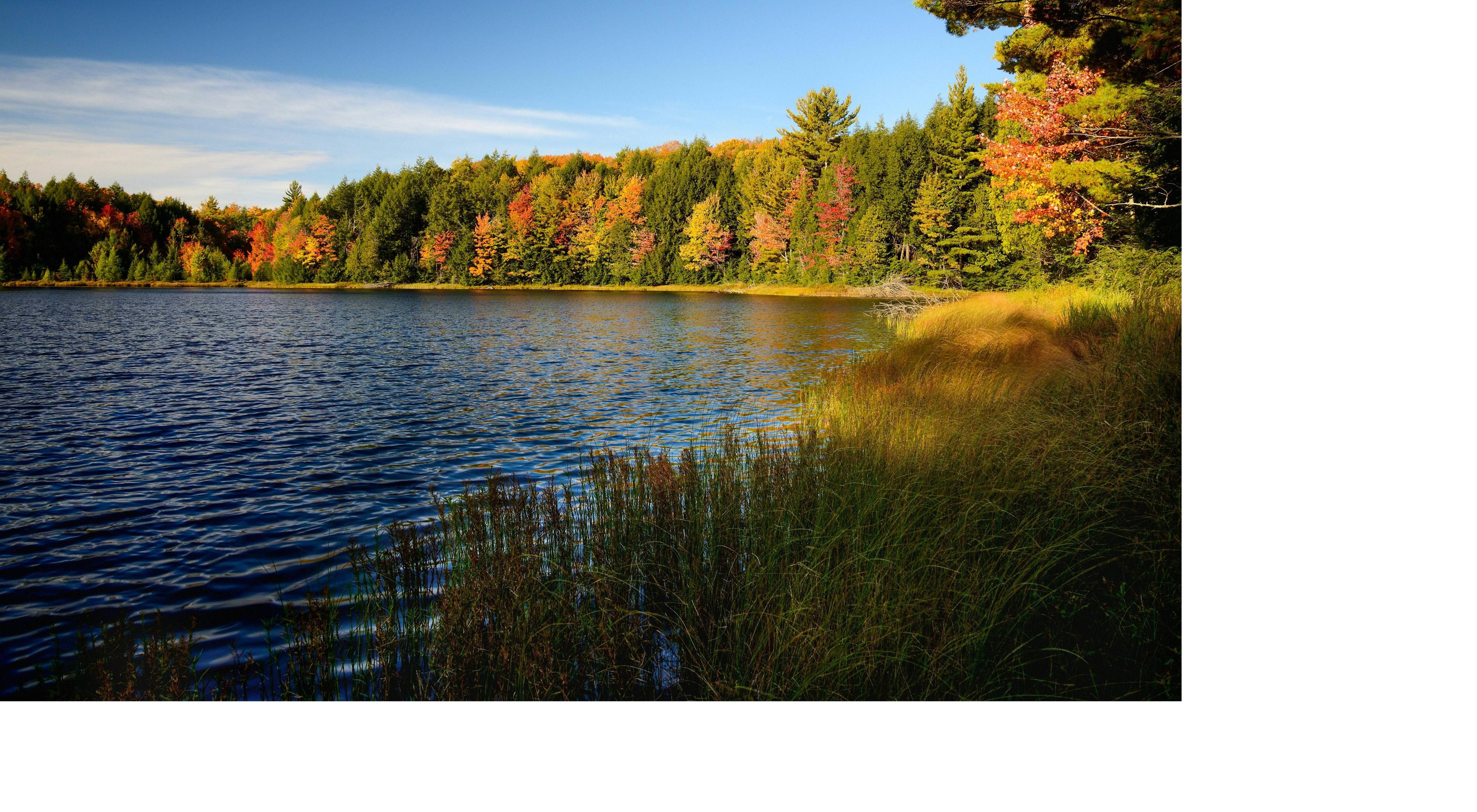 A northern Wisconsin lake shimmers in the sun, surrounded by reeds and colorful fall trees.