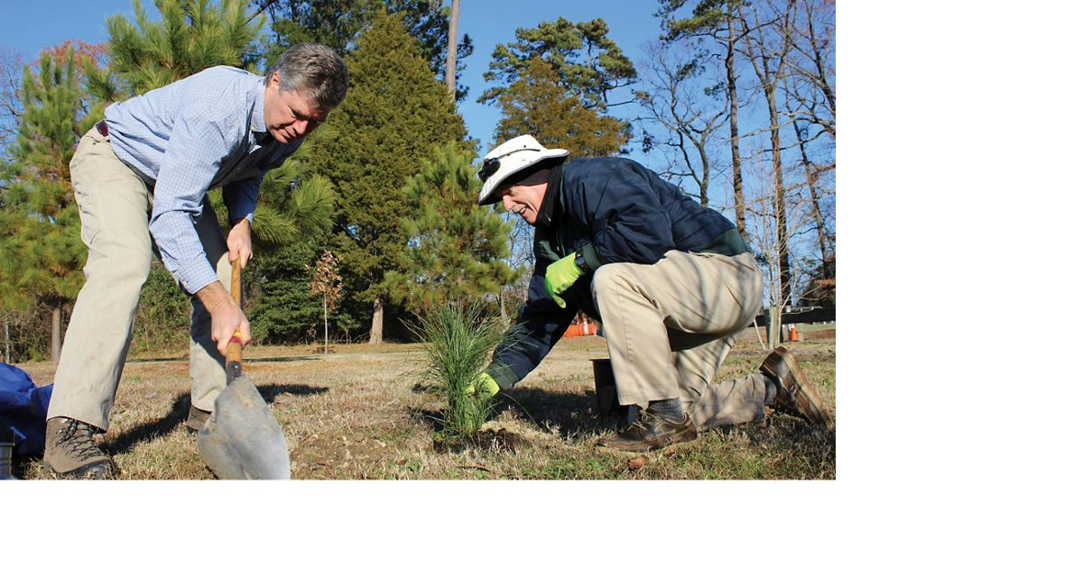 TNC's Bobby Clontz, with shovel, plants longleaf pine seedlings with Virginia Beach parks staff, Lawson/Lake Smith Natural Area, Virginia.