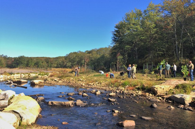 Volunteers work to plant the former impounded area following a dam removal on the Eight Mile River.
