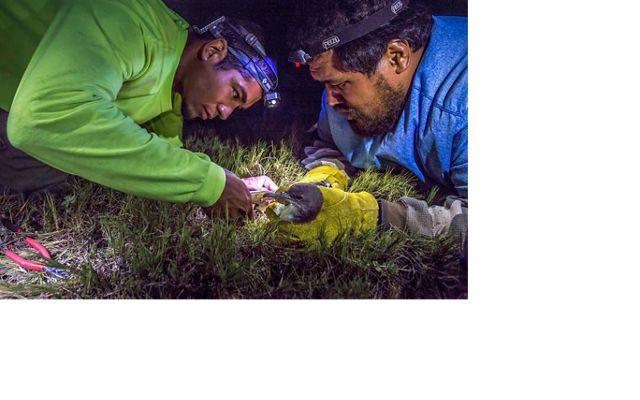 two men with headlamps leaning over a bird