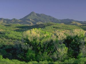 Landscape view of a green riparian corridor in the Patagonia-Sonoita Creek Preserve in Arizona, with trees in the foreground and mountains in the background.