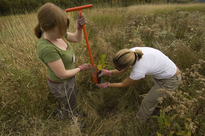 Two women in a field of tall grass plant an elm.