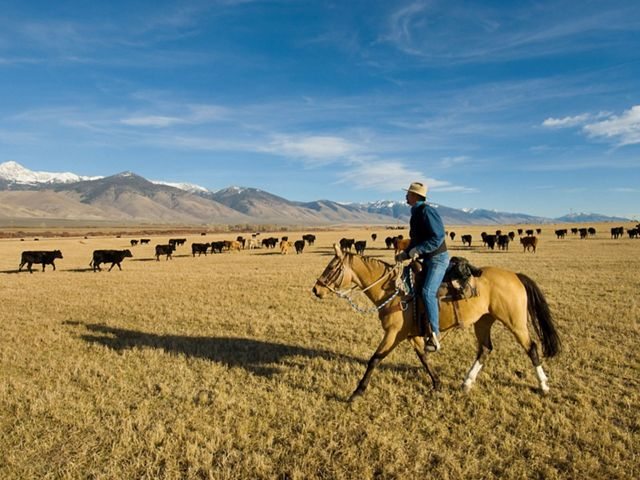 Photo of a rancher riding on a horse on an Idaho ranch, with cattle in the background.