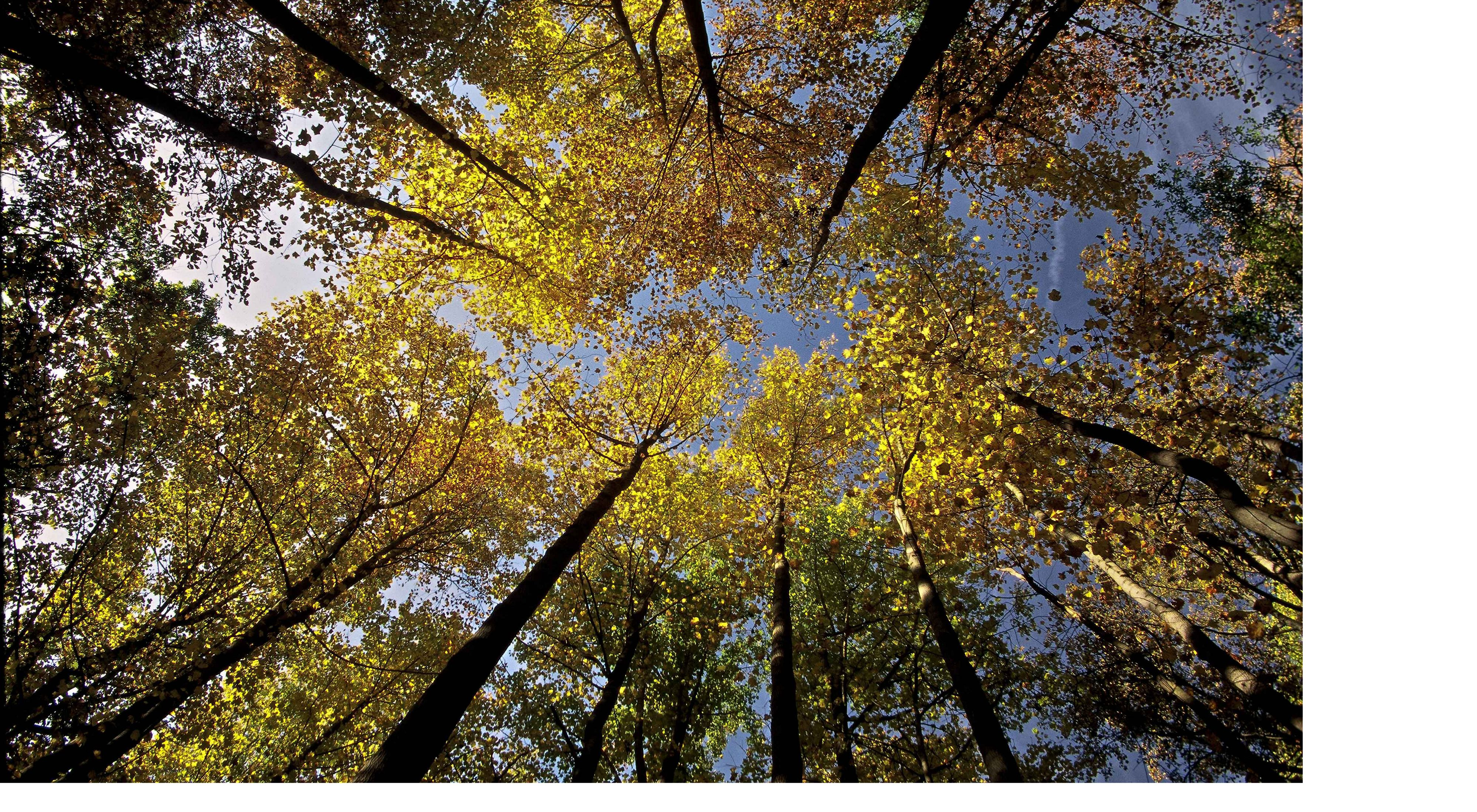Photo of looking up into a tree canopy.