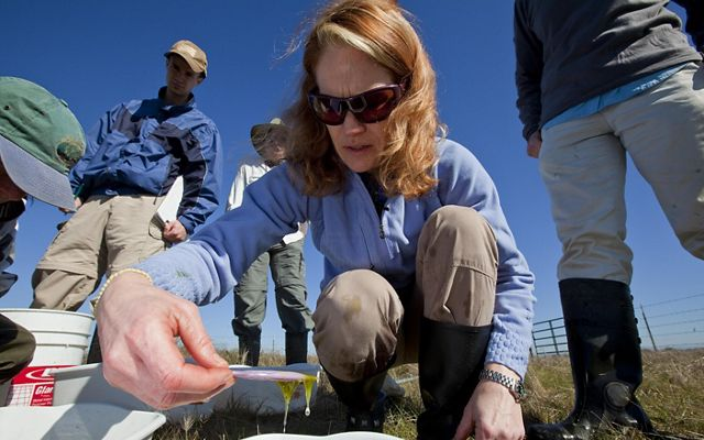 A researcher kneels down close to the camera and examines a water sample.