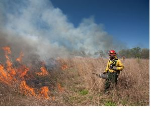 Working the fire line of a controlled burn