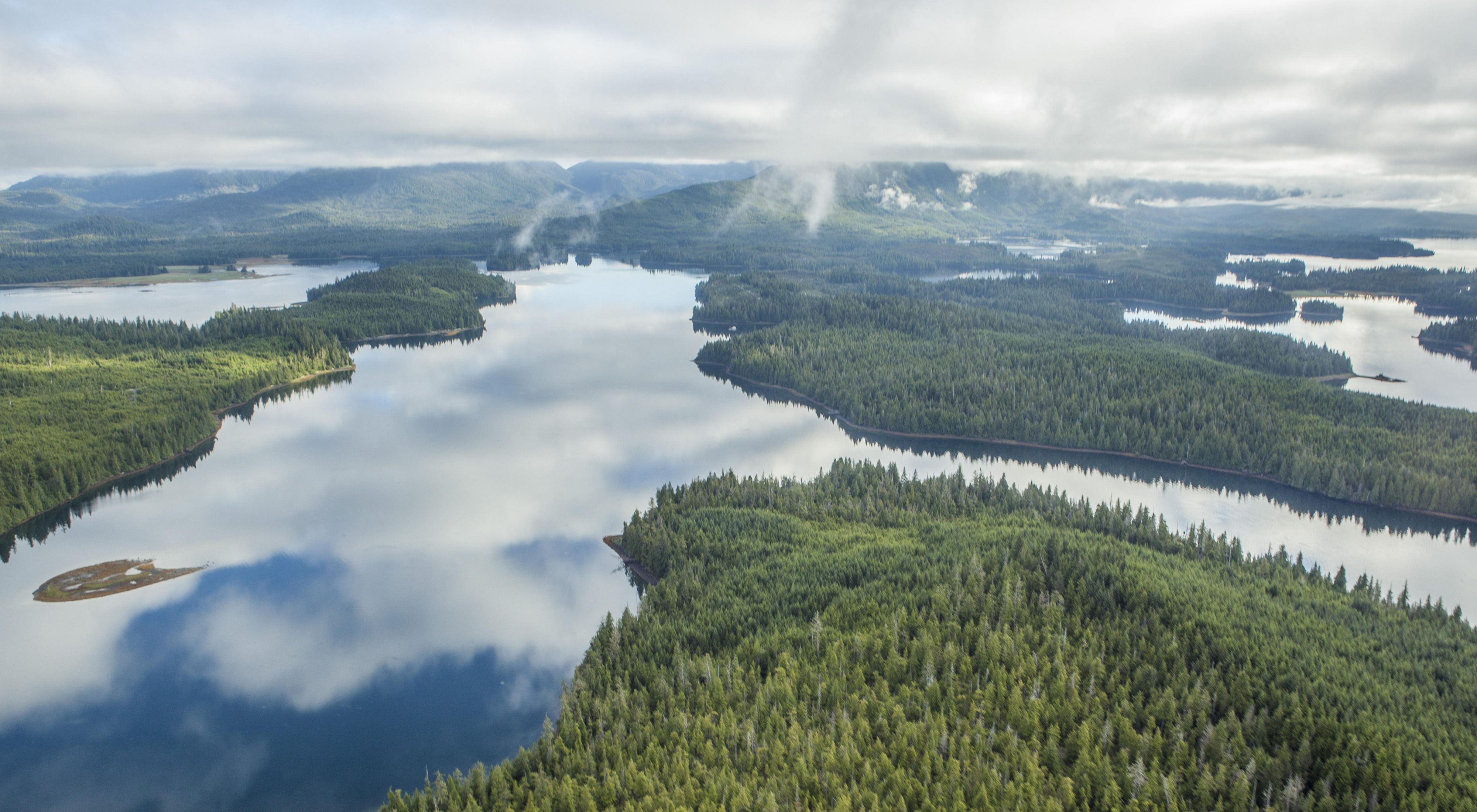 Aerial of cedar and spruce forest divided by rivers and inlets.