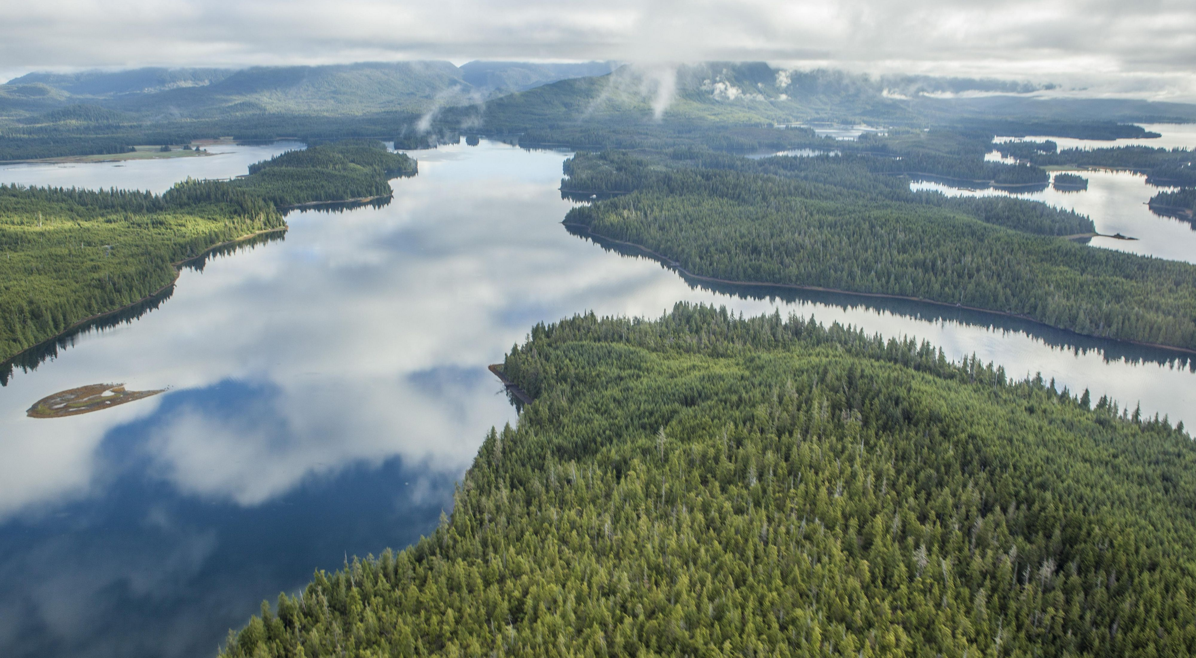 Aerial view of water and forests.