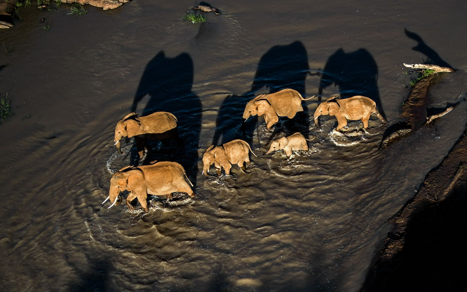 Elephants cross a river at Loisaba Conservancy.