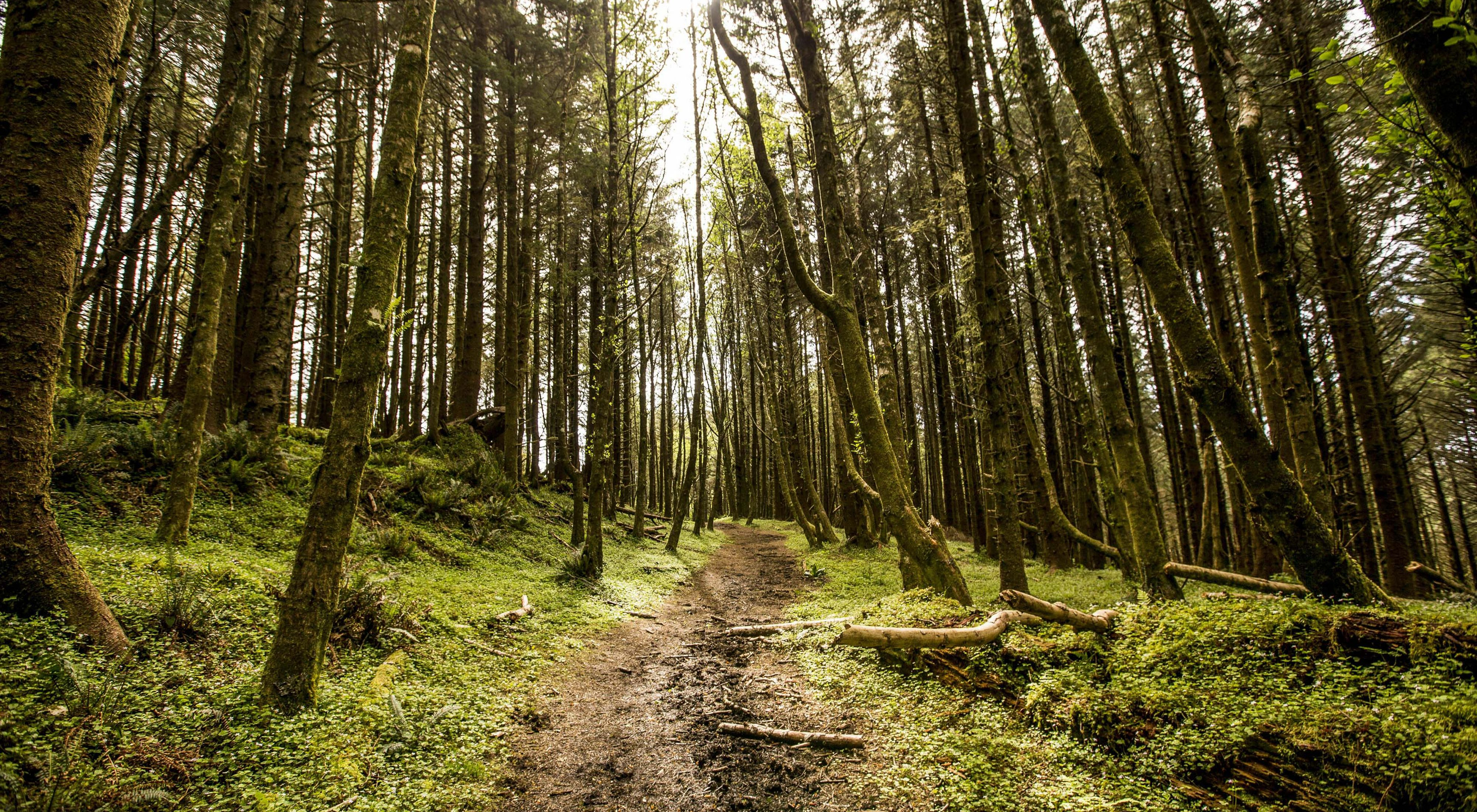 Forest located on the Conservancy's Cascade Head Preserve, north of Lincoln City, Oregon.