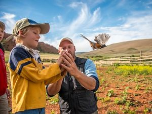 A bird flies out of a boys hand after it has been banded.