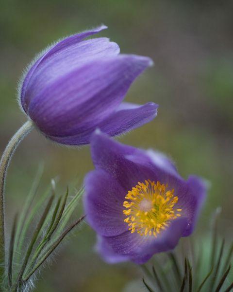 Tensleep Preserve flora.