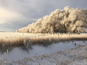 Wyoming frosty winter morning. © Carlice Cutright/2019 TNC Wyoming Student Photo Contest Submission