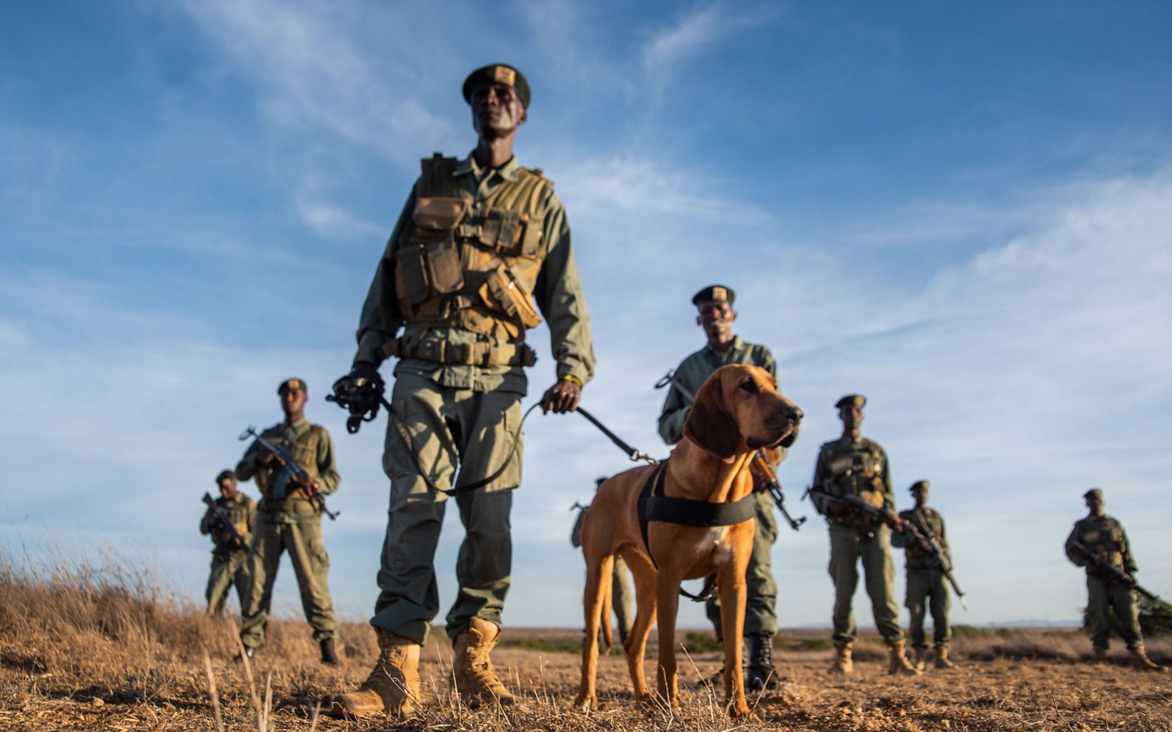 Tracker dogs and security team at Loisaba Conservancy, Kenya.