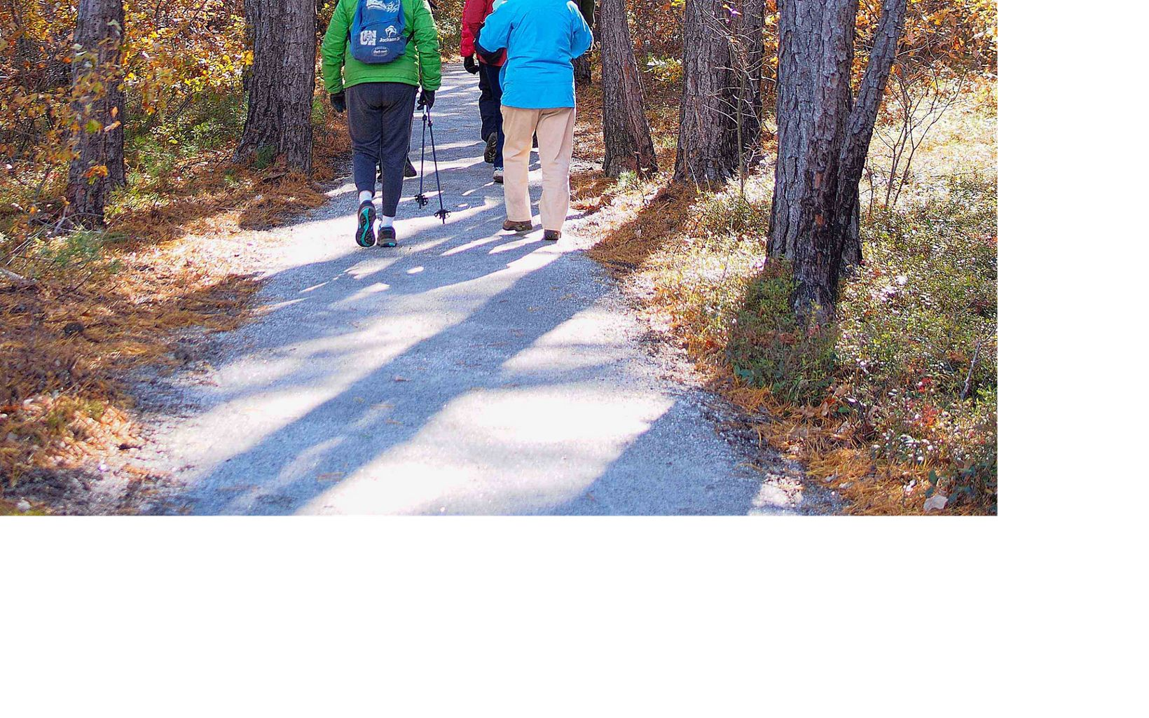 The Ossipee Pine Barrens provides a perfect place to explore nature in any season.