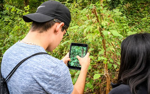 A young man views a tablet to help identify plants in an Austin, Texas, park.