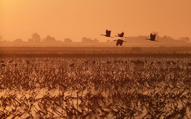 Birds flying over a flooded field.