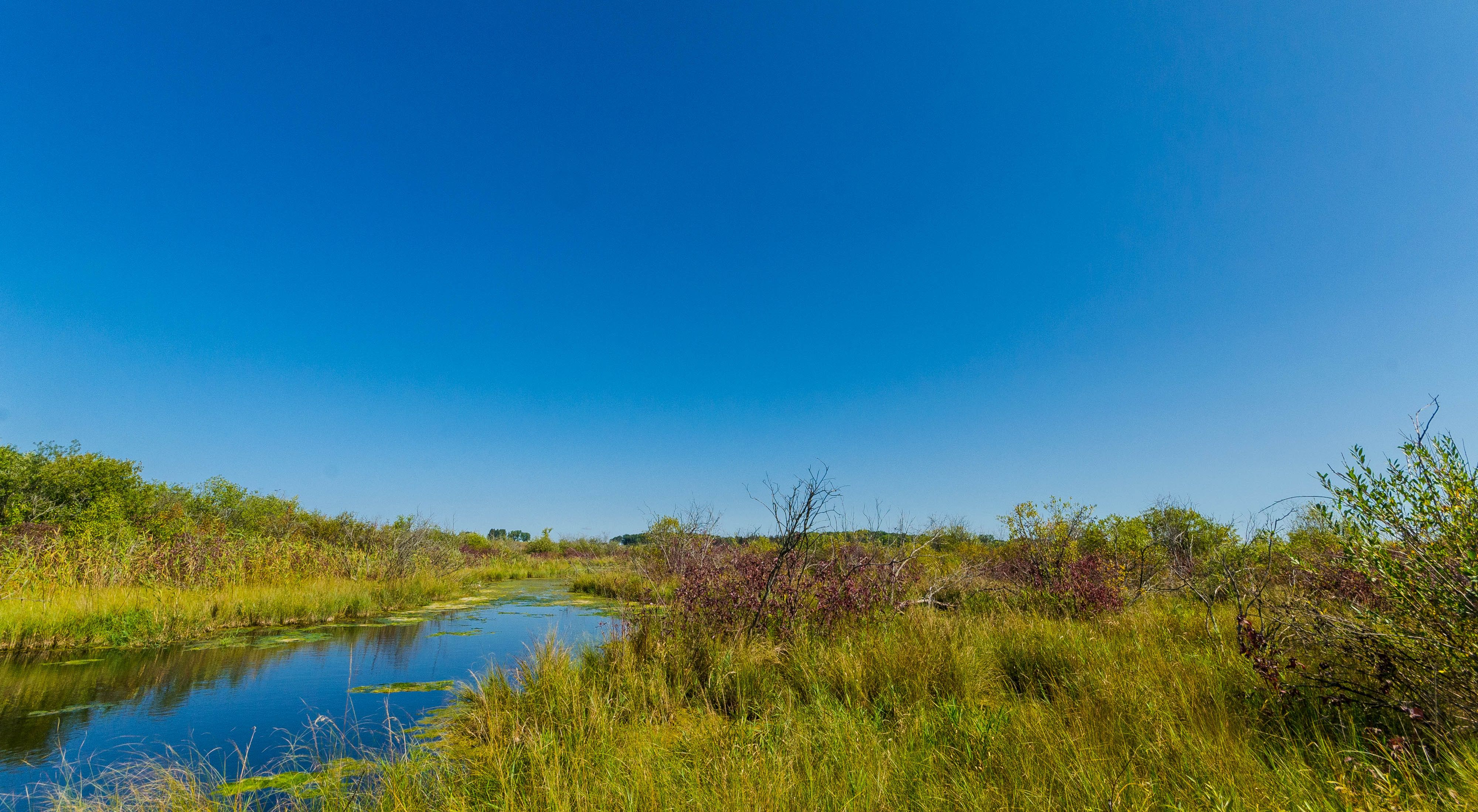 small stream meanders through green wetlands under a bright blue sky during summer