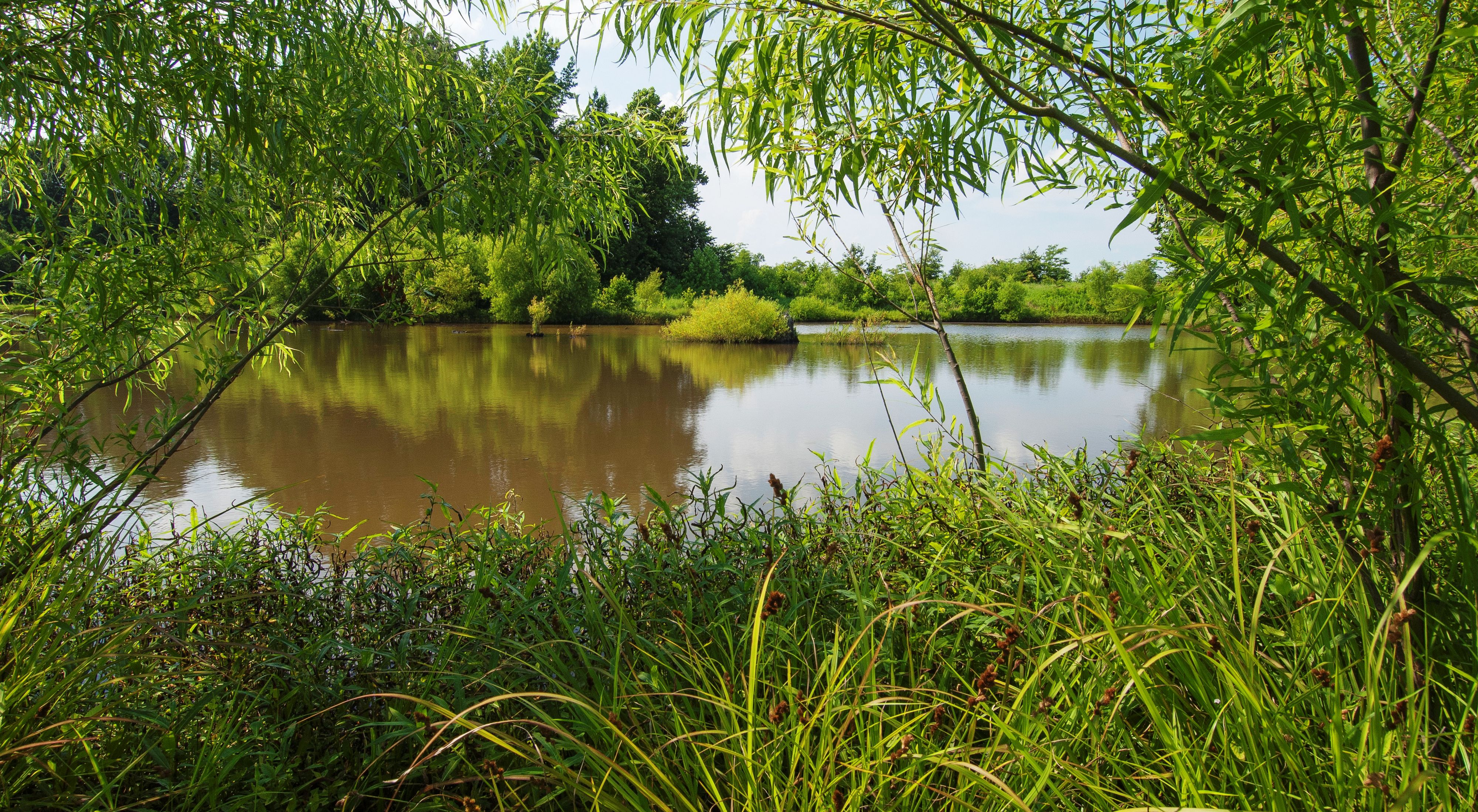 Lush vegetation frames a pond and surrounding wetlands.